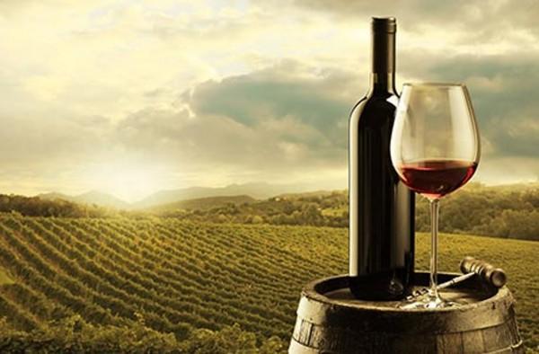 1 Tag auf dem Weingut mit Übernachtung